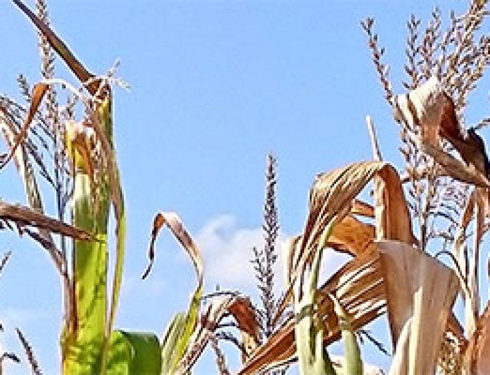 Pflanzenentwicklung